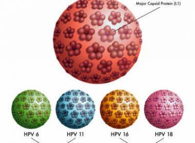 ВПЧ, вирус папилломы человека