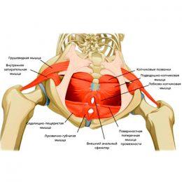 Хорошо тренируйте свои мышцы тазового дна